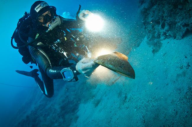 Biologia Marina Isole Tremiti